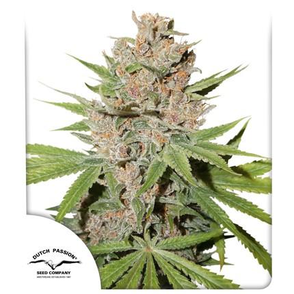 Graines de cannabis Passion Fruit