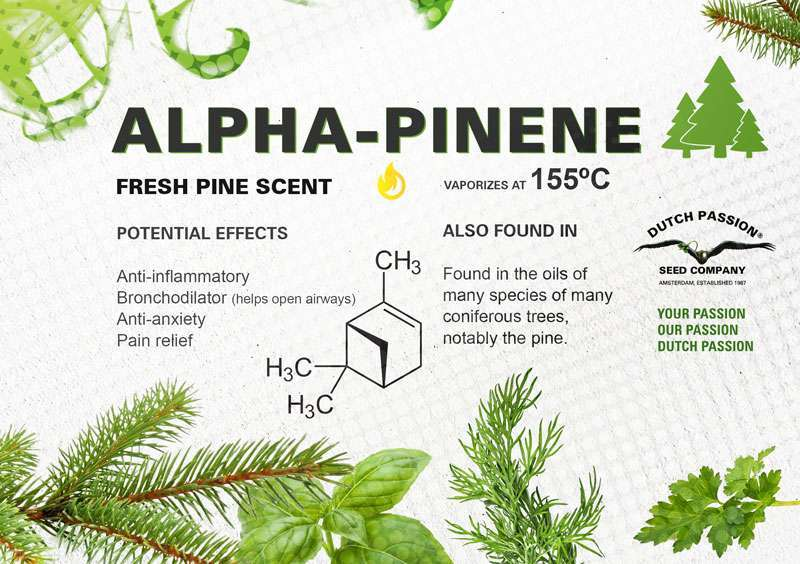 Alpha-pinene terpene profile