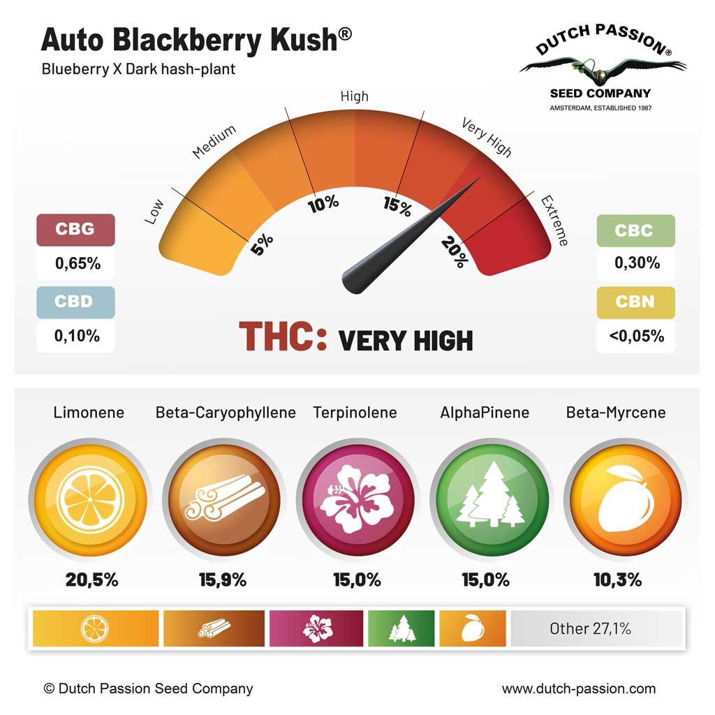 Auto Blackberry Kush terpenes and cannabinoids