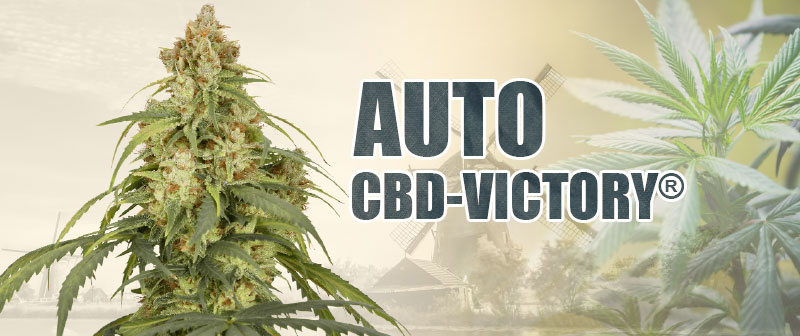 Auto CBD-Victory