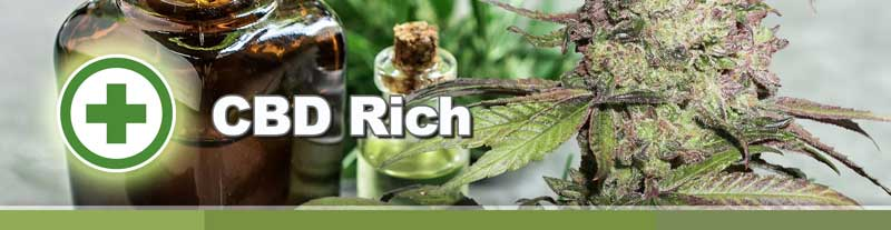 Dutch Passion CBD Rich cannabis seeds