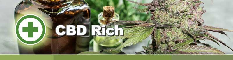 CBD Rich seeds by Dutch Passion