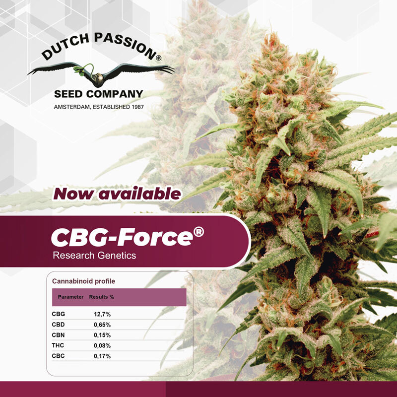 CBF Force Feminised Seeds Cannabinoid Profile