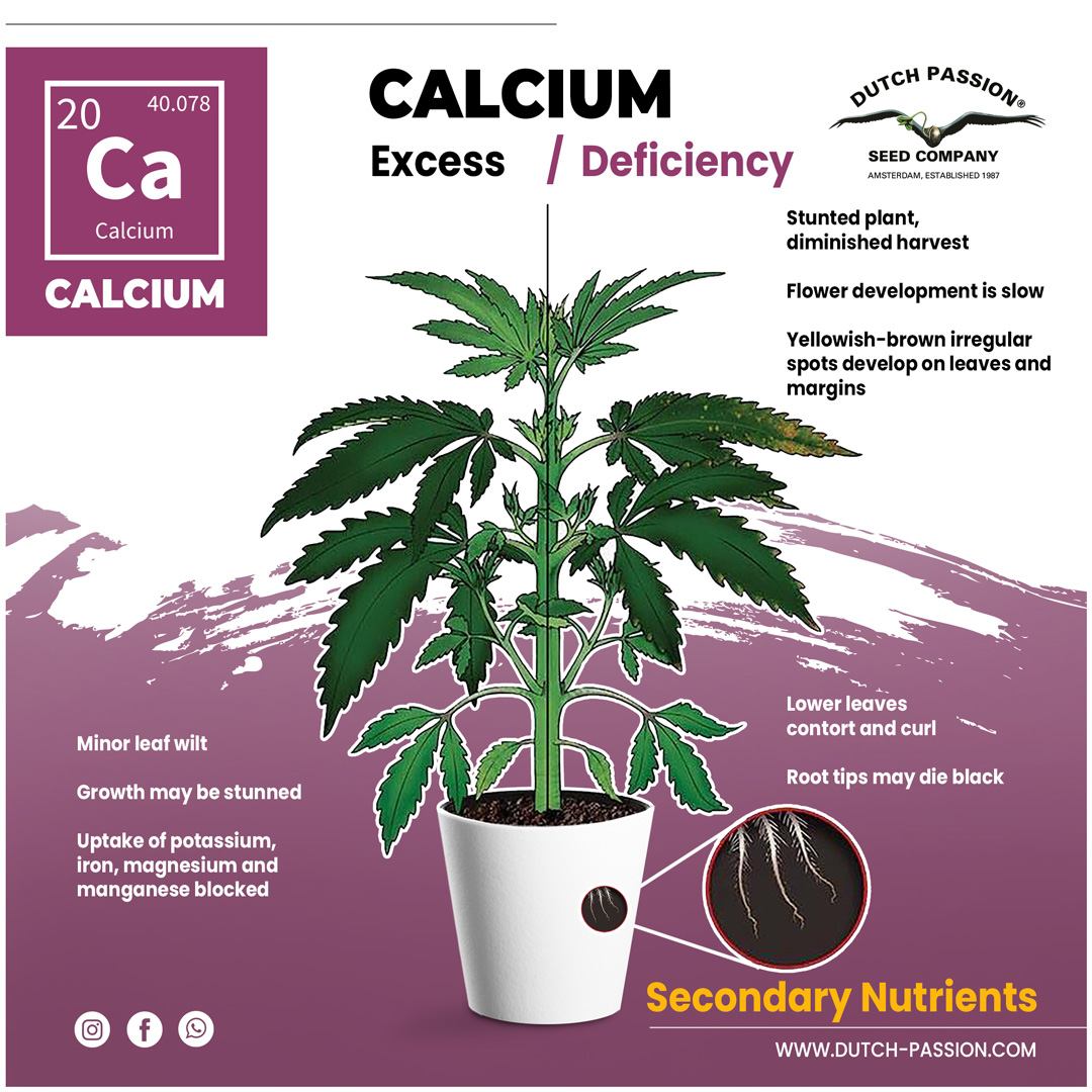 Calcium deficiency in a cannabis plant