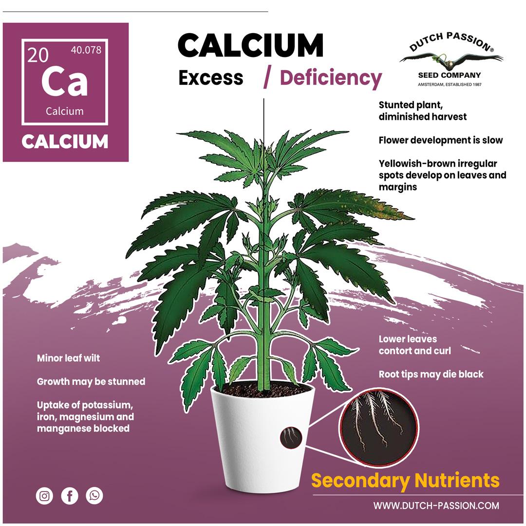 Calcium deficiency in a cannabis plant