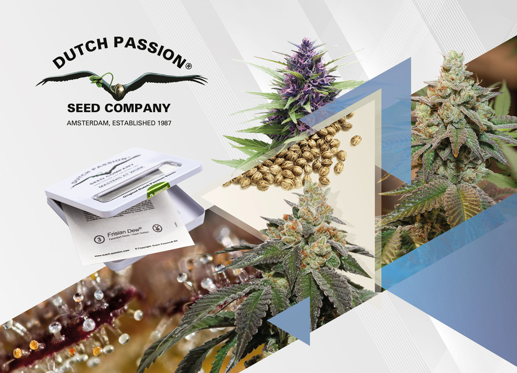 Dutch-passion-buy-the-best-cannabis-seeds-online-easy