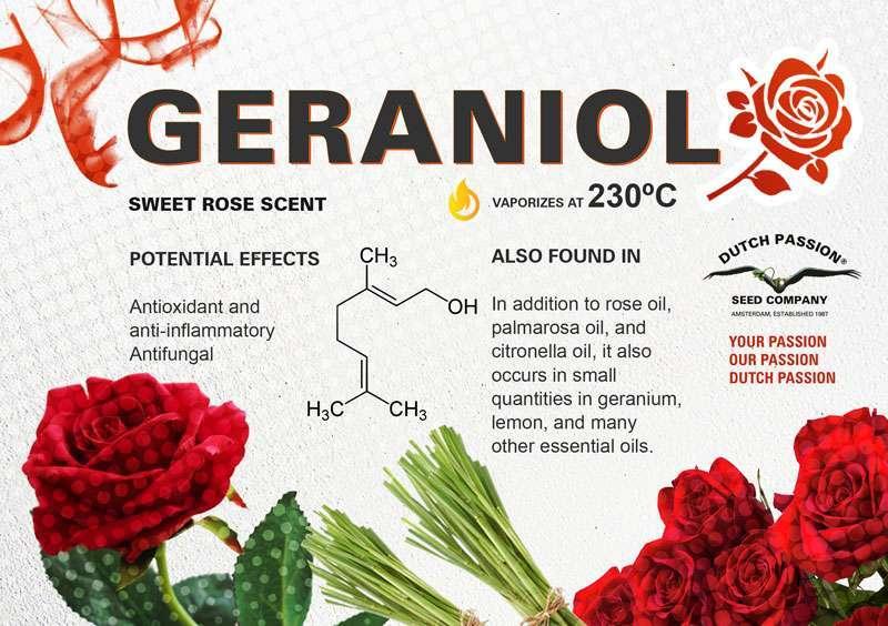 Perfil terpénico del geraniol