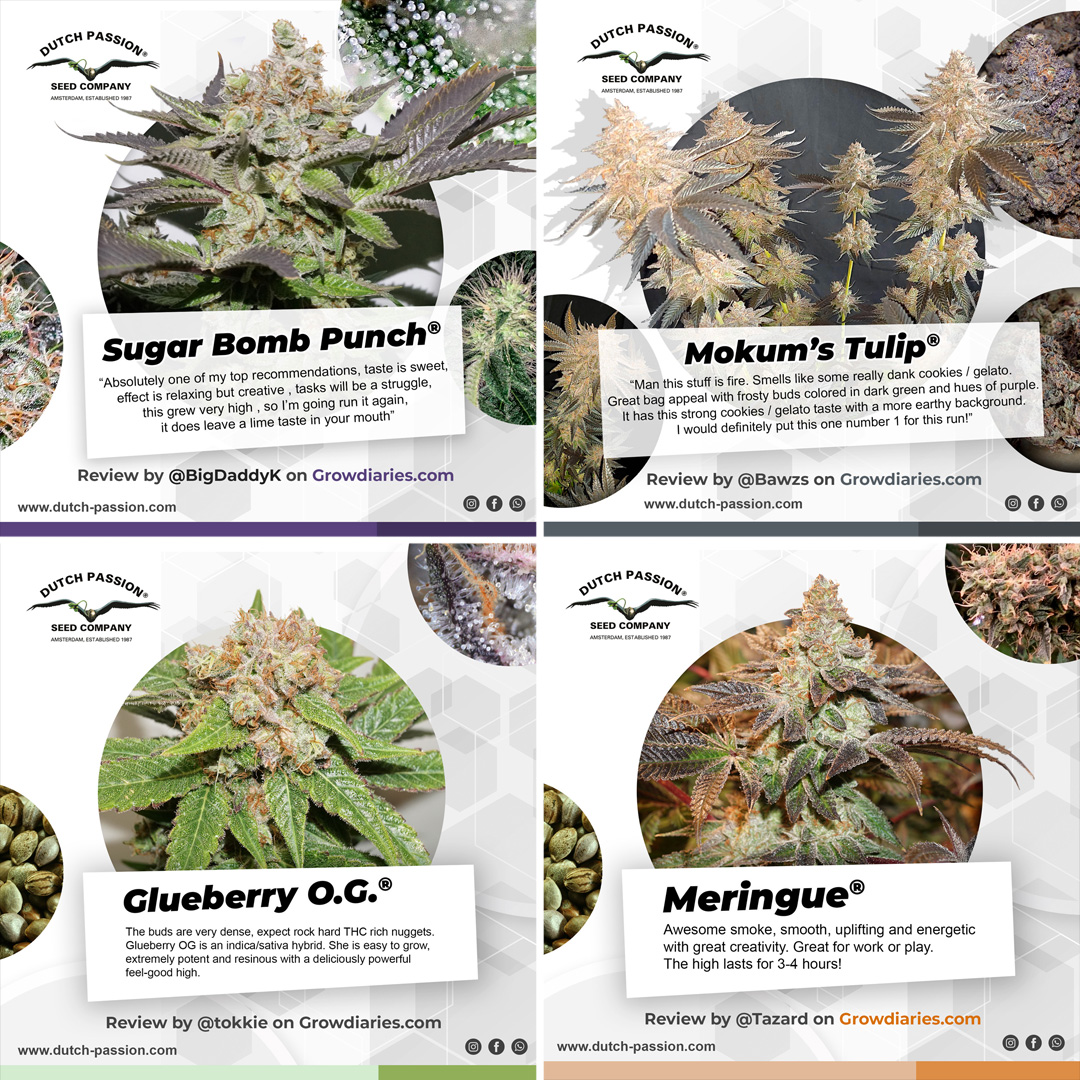 Reviews about Dutch Passion seeds