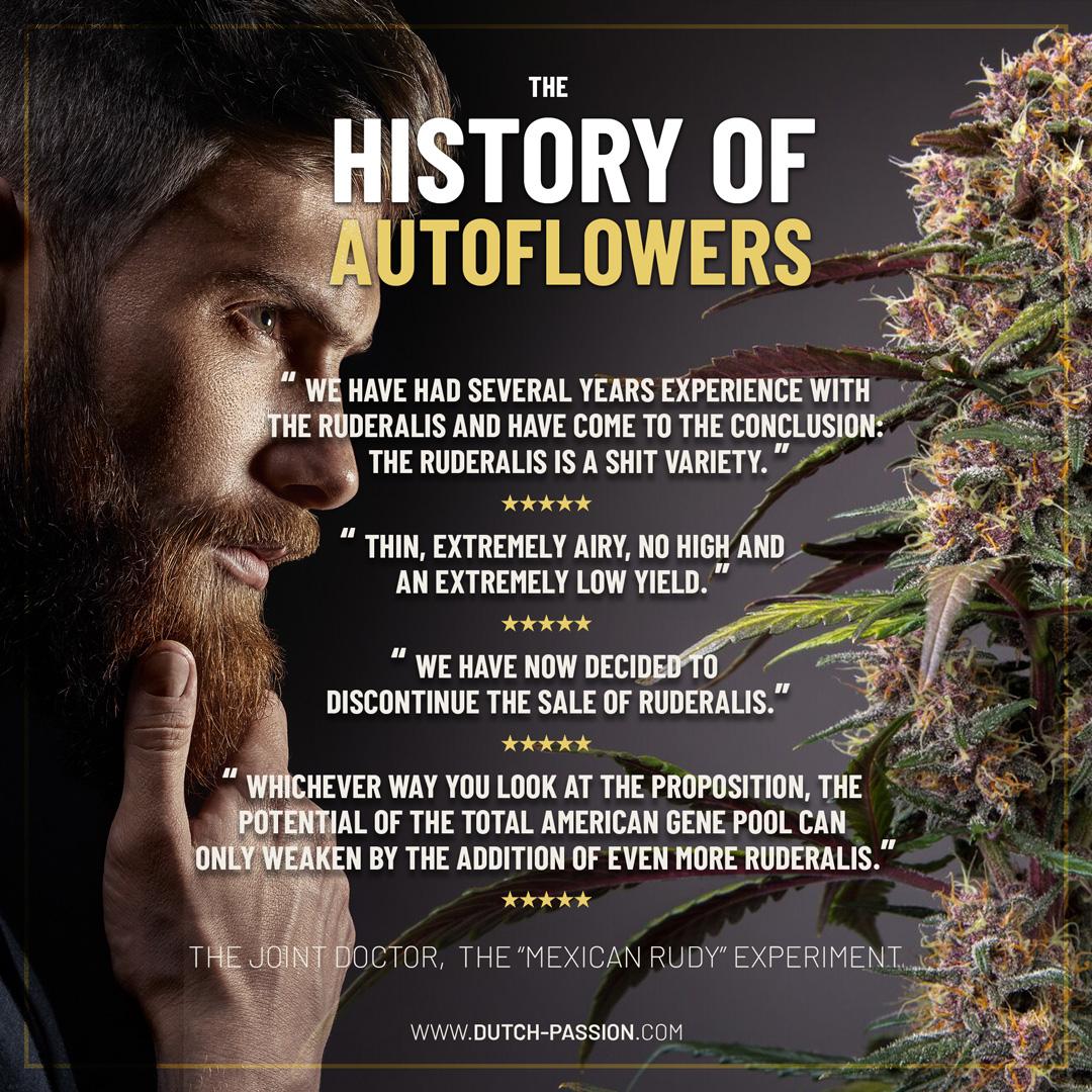 History of autoflowers