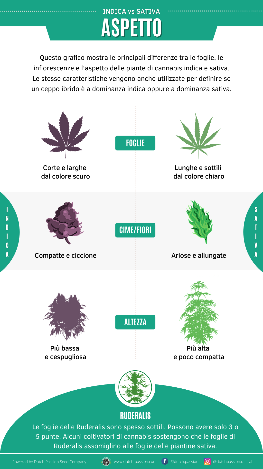 Indica vs Sativa appearance