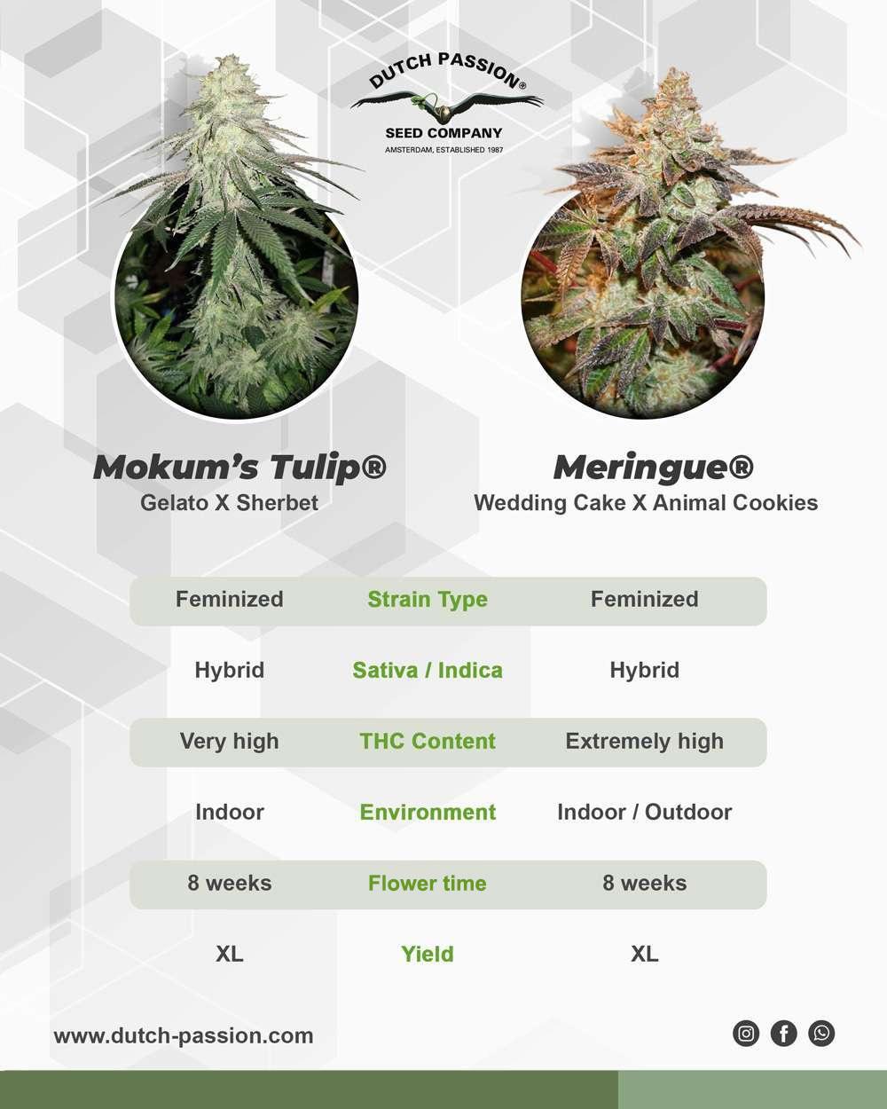 Mokum's Tulip vs Meringue
