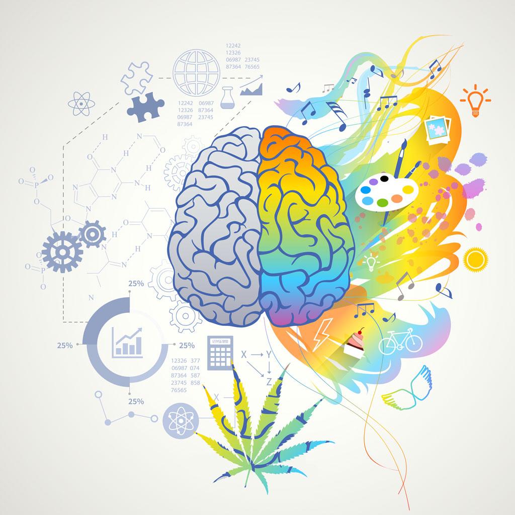 Sativa effect on the brain