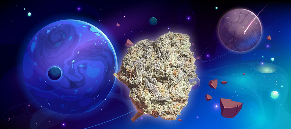 Stardawg or Stardog cannabis info
