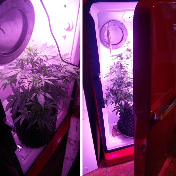 Small grow spaces