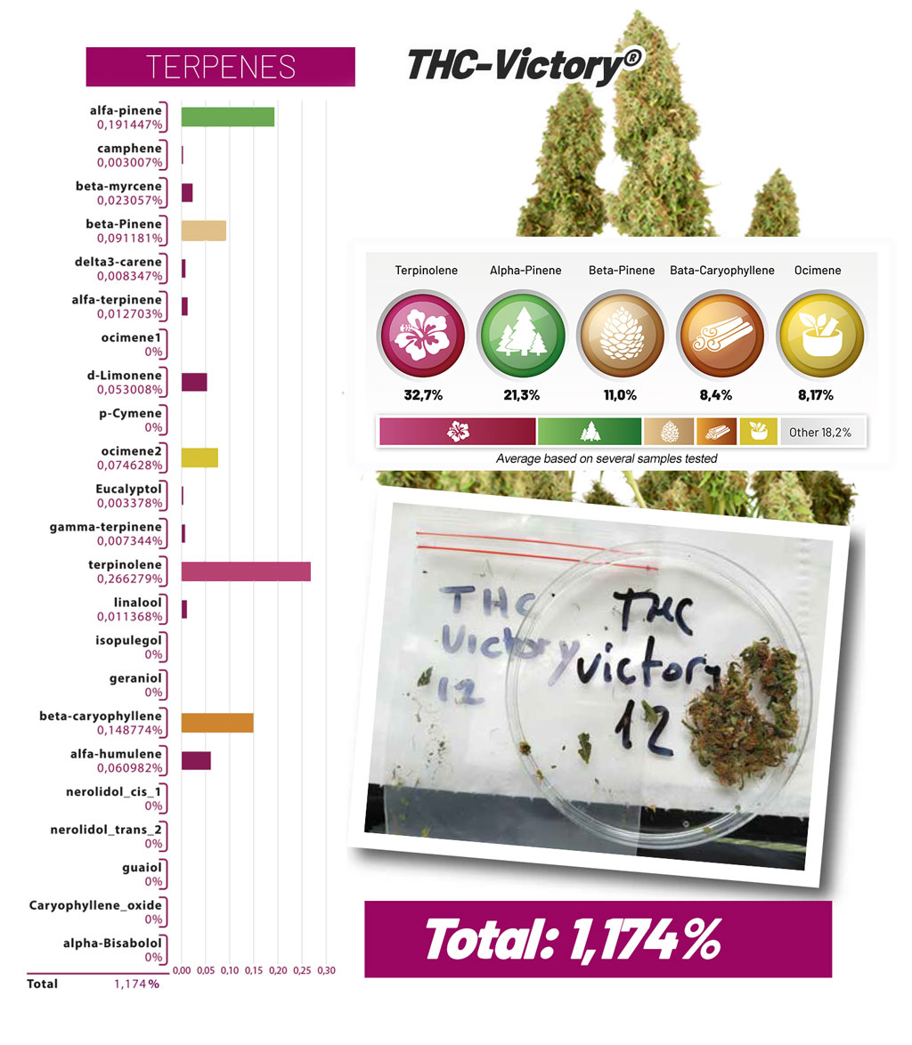 THC-Victory terpenes and cannabinoids