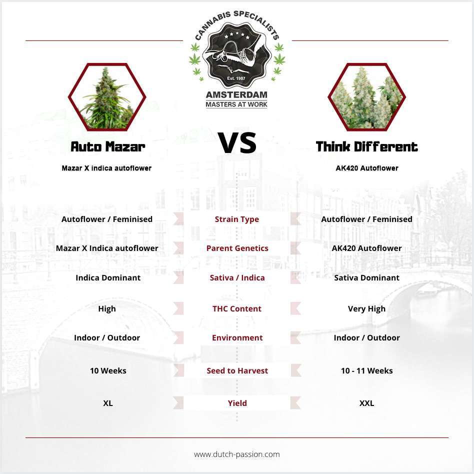 Auto Mazar vs Think Different: Which Autoflower Should You Pick?