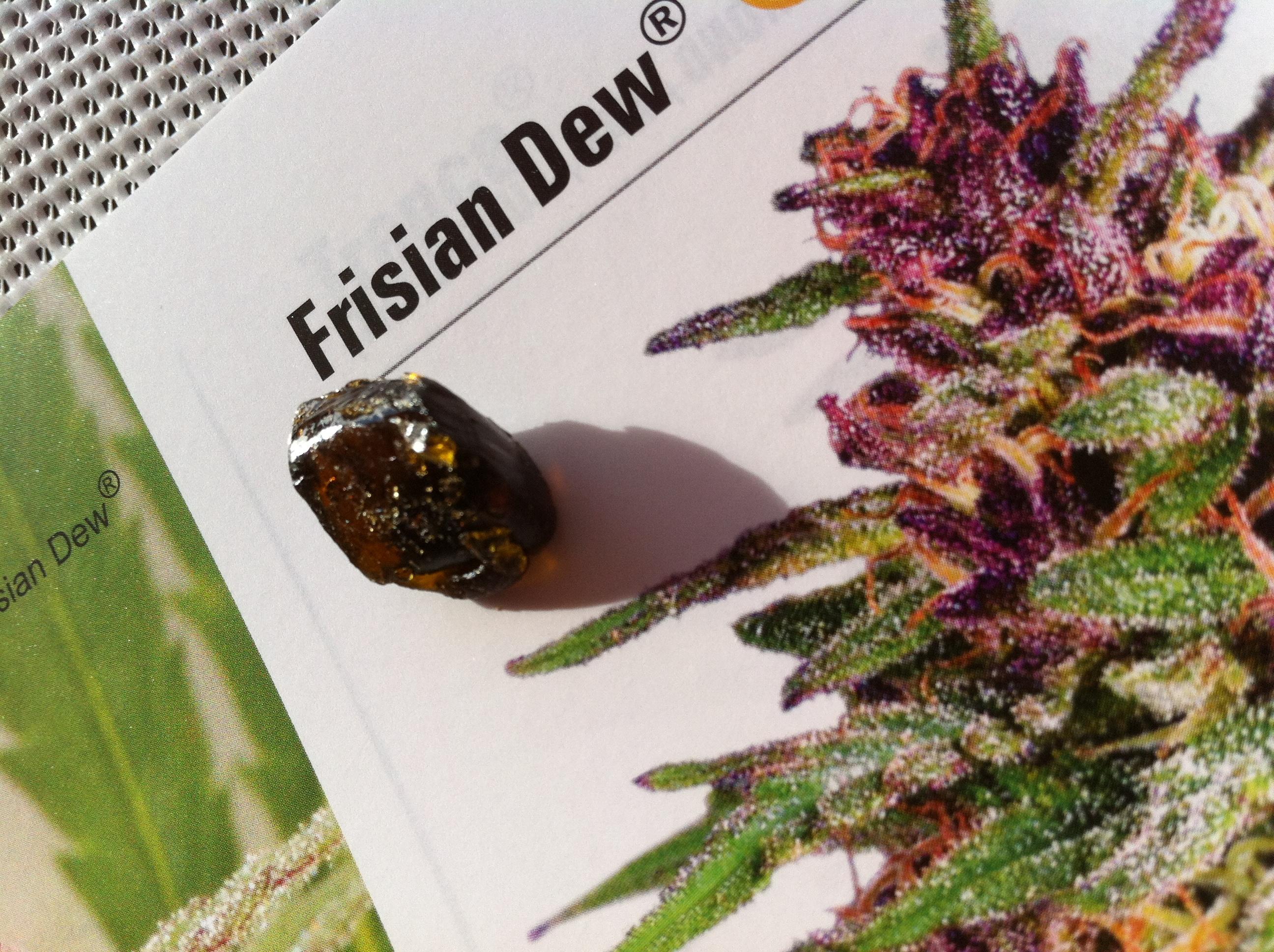 frisian dew BHO