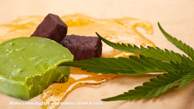 Cannabis leaves are perfect for cannabutter and edibles
