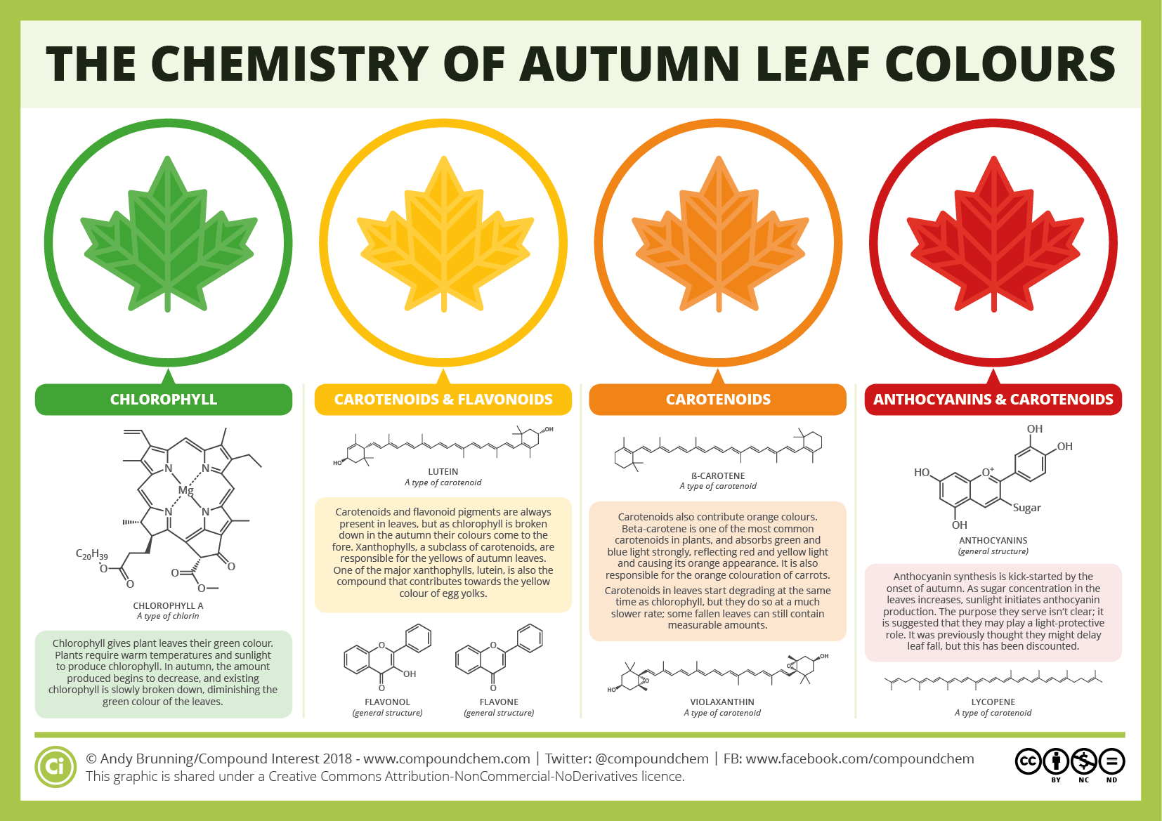 The chemistry of the colours of autumn leaves