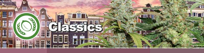 Dutch Passion Classics cannabis seeds