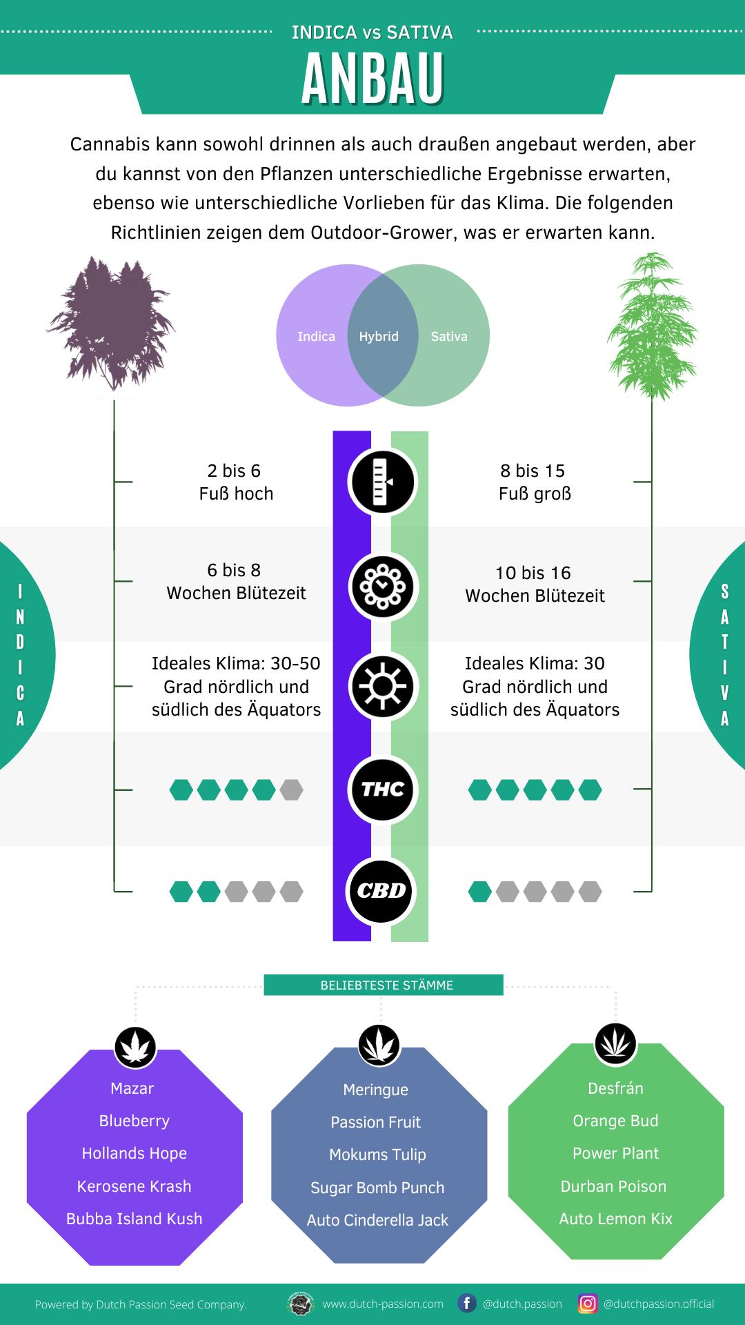 Indica vs Sativa cultivation