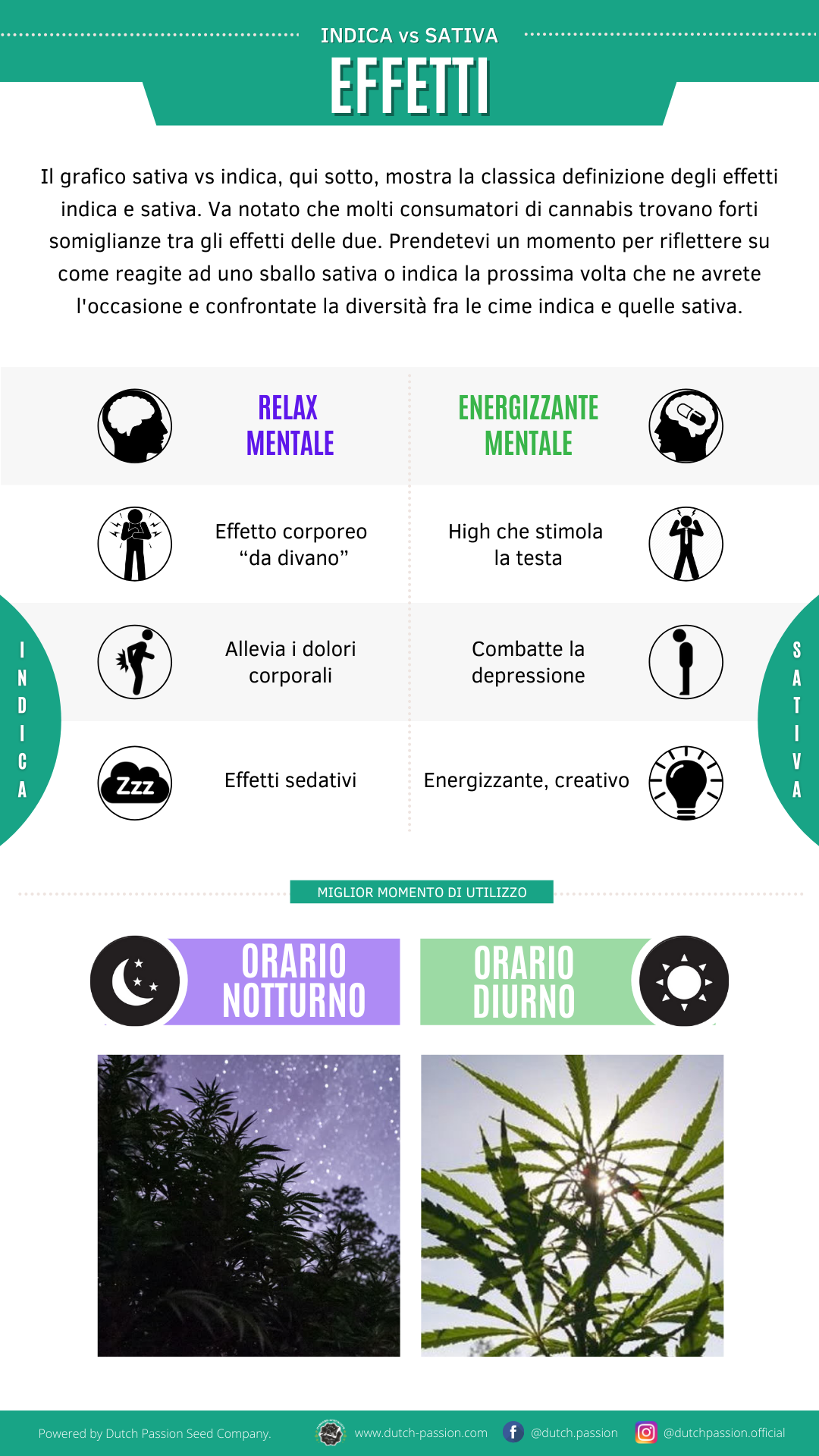 Indica vs Sativa effects
