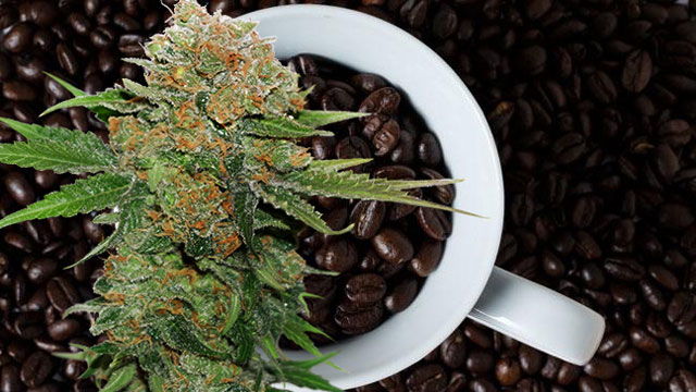 a-cup-of-late-night-roast-coffee-combined-with-strong-dutch-passion-indica