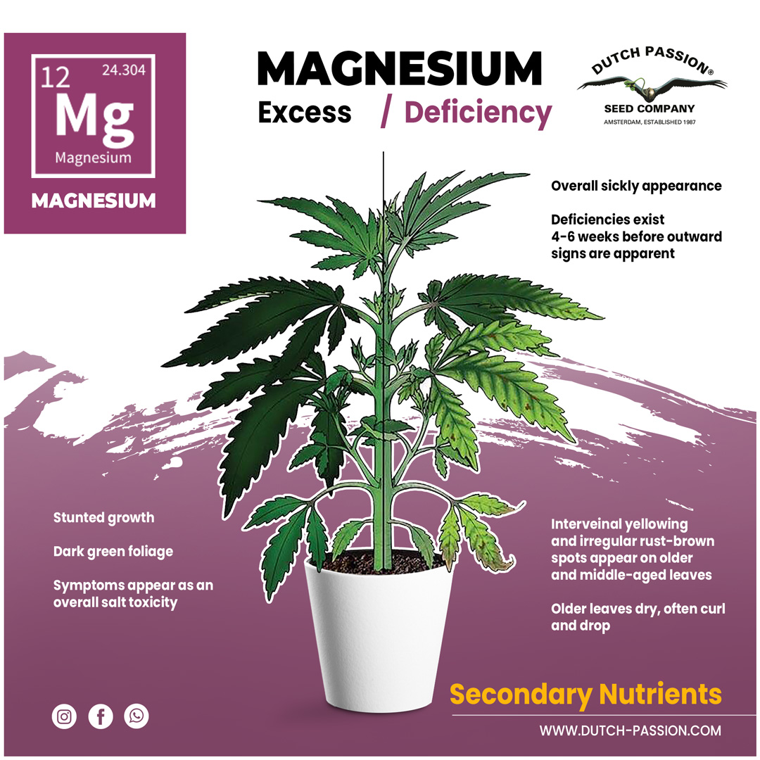 Magnesium deficieny in a cannabis plant