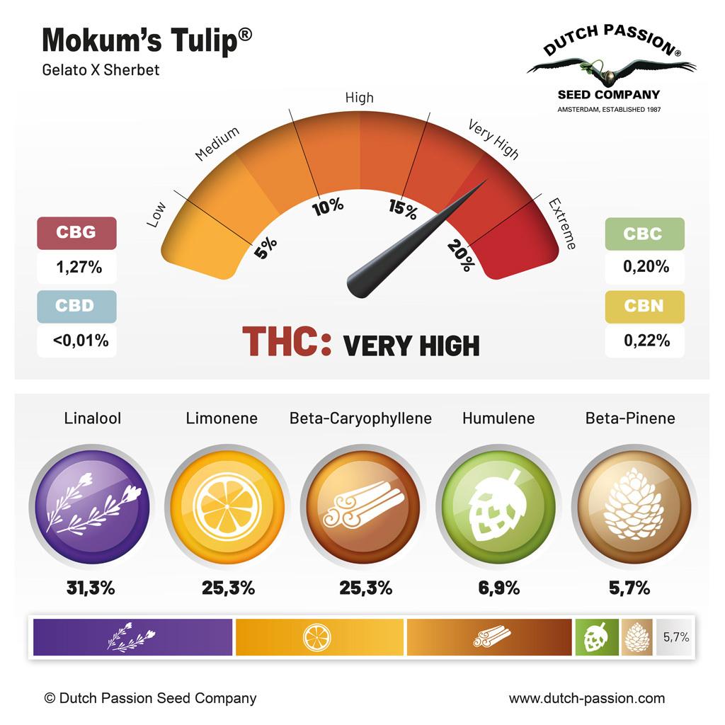 Mokum's Tulip terpenes and cannabinoids