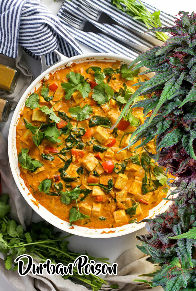 Coconut curry infused with cannabis