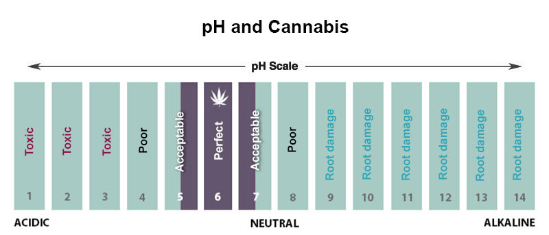 pH levels for cannabis