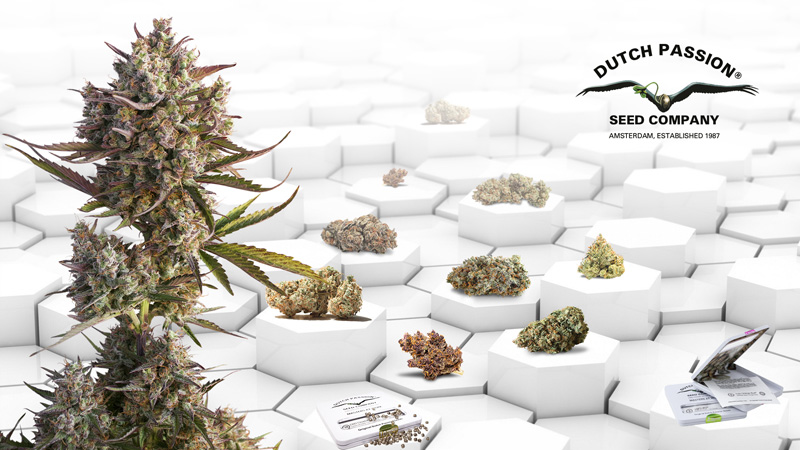 The best cannabis strains for you