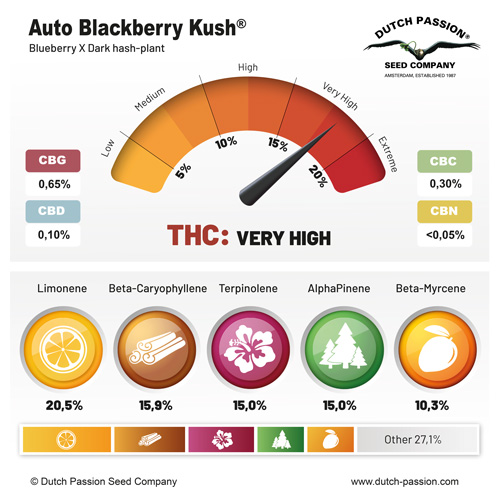 Auto Blackberry Kush terpenes and cannabinoids