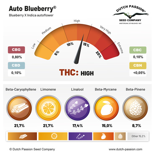 Auto Blueberry terpenes and cannabinoids