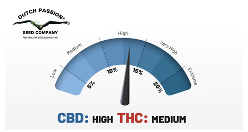 CBD high THC medium