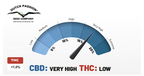 CBD Very high THC low