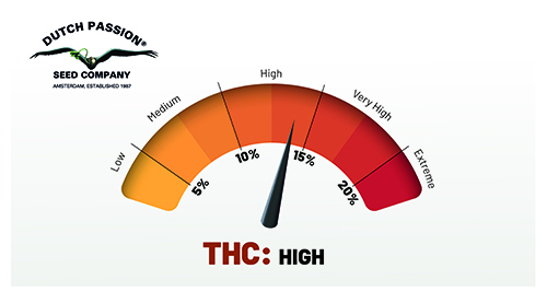 high thc cannabis zaadjes