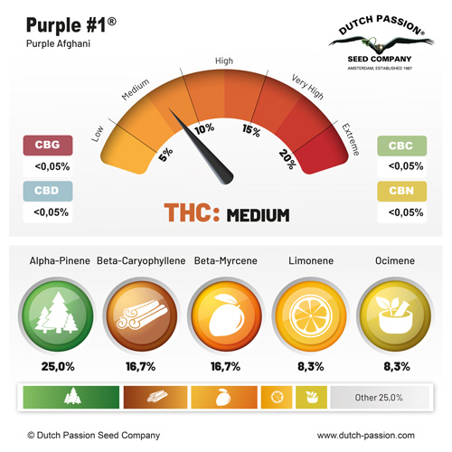 Purple #1 cannabinoids and terpenes