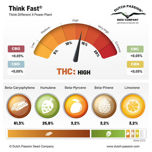 Think Fast terpenes and cannabinoids