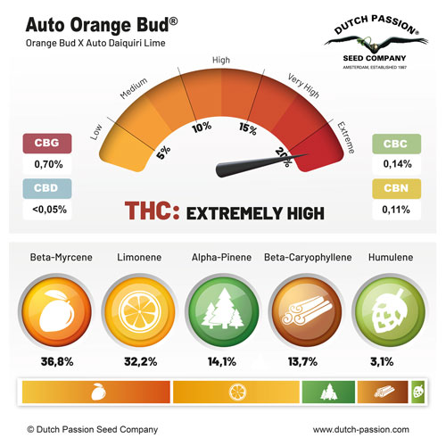 Auto Orange Bud fruity terpenes