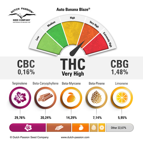 auto-banana-blaze-terpenes-and-cannabinoids-dutch-passion-cannabis-seed-company_1.jpg