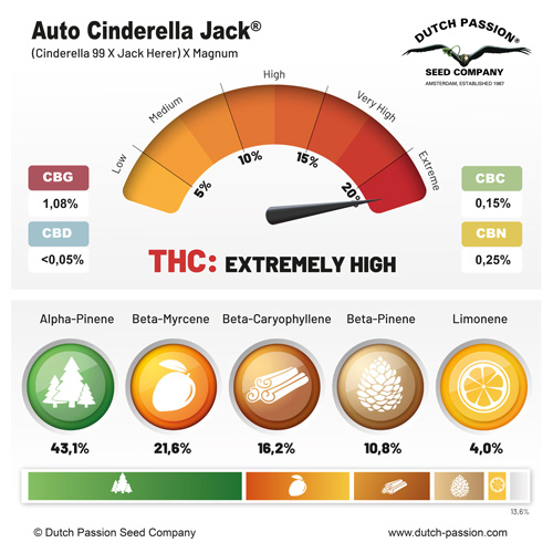 Auto Cinderella Jack terpenes and cannabinoids