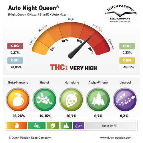 Auto Night Queen terpenes and cannabinoids