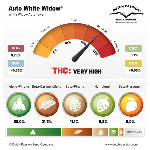 Auto White Widow terpenes and cannabinoids