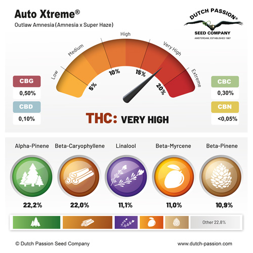 Auto Xtreme cannabinoids and terpenes