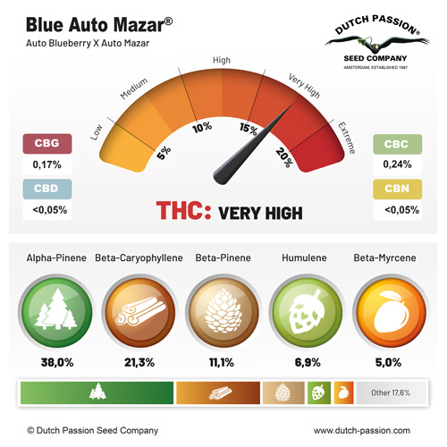 Blue Auto Mazar terpenes and cannabinoids
