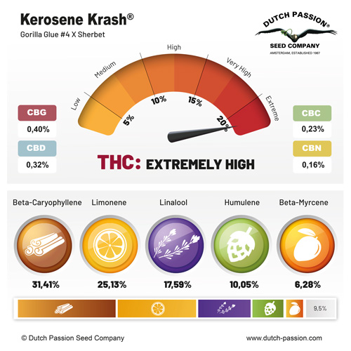 Kerosene Krash terpenes and cannabinoids profile