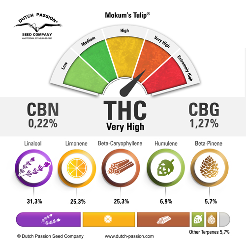 Mokum's Tulip terpenes and cannabinoids