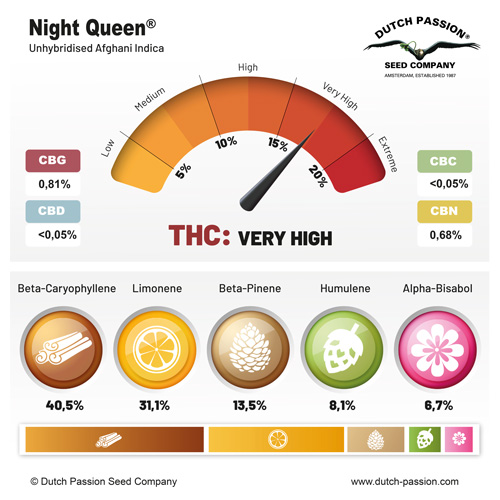 Night Queen terpenes and cannabinoids