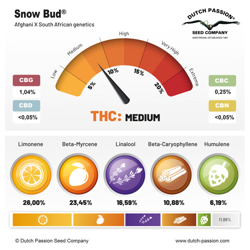 Snow Bud terpenes and cannabinoids